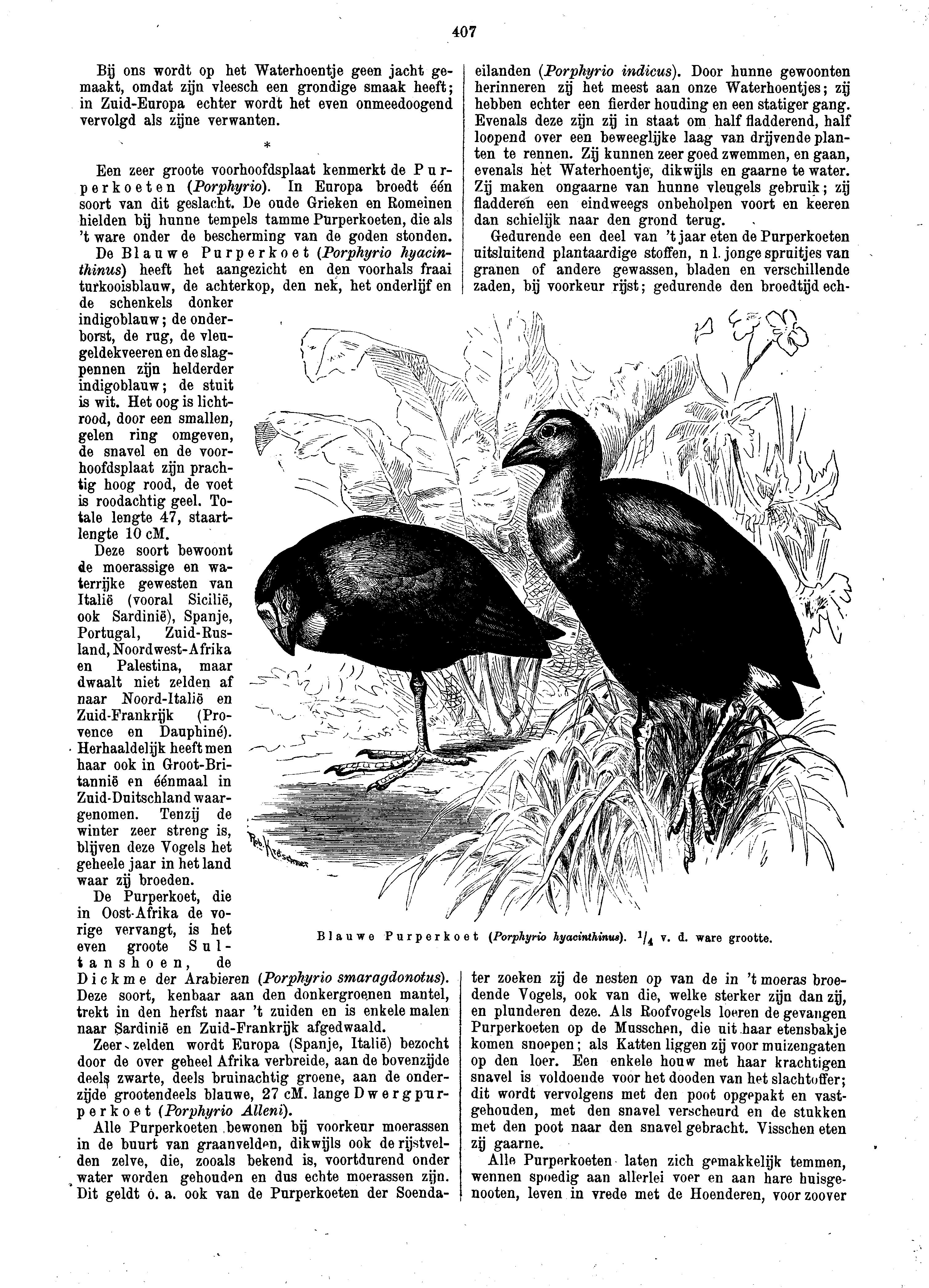 zwarte vogel met zwarte snavel